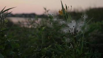 natur och löv i skymningen