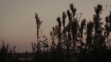 Brush at Sunset