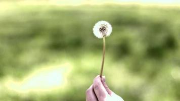 Woman blowing dandelion in the wind