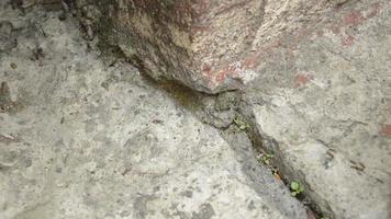 pequeñas hormigas caminando.