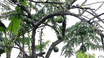 árboles tropicales.
