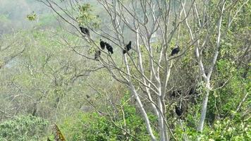 abutres.