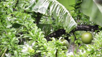 lluvia y arboles