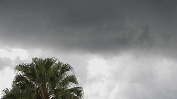 timelapse de palmeras y nubes video