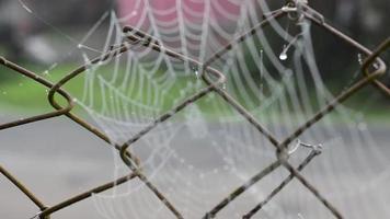 fokussiere das Spinnennetz