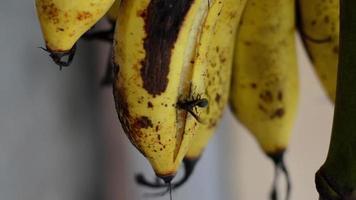 avispa y plátanos