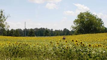 plano amplio de un campo de flores