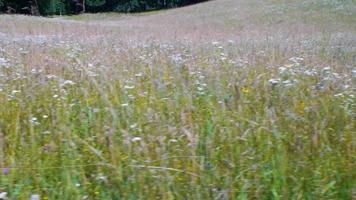 un campo cubierto de flores silvestres video