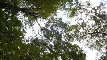 A vertigo-inducing look at the canopy of trees above