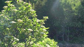 Pollen in Wind 4k