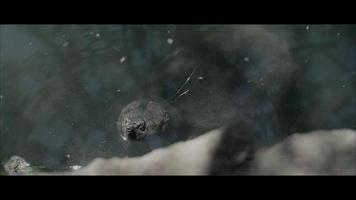 tartaruga video