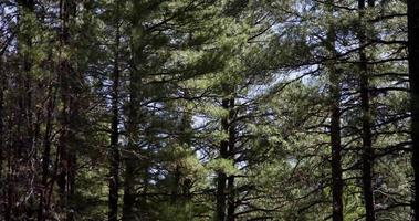 Toma panorámica vertical de hermosos árboles en bosque verde en 4k