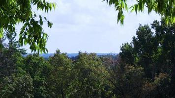árboles arriba