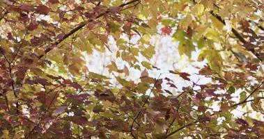bela moldura de folhas vermelhas e verdes movendo-se lentamente em 4k