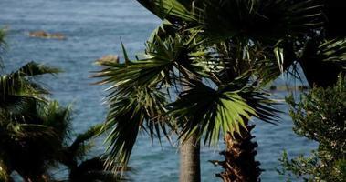 panorâmica de palmeiras movendo-se lentamente com o fundo do mar desfocado em 4k