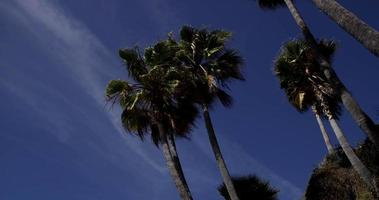 Low angle shot of palm trees with soft clouds and blue sky in background in 4K video