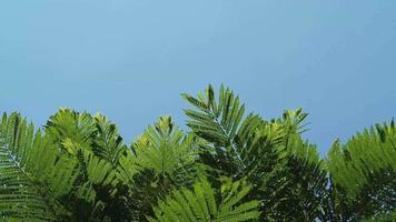galhos de árvores verdes e céu video