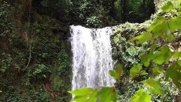 cachoeira e folhas desfocadas em primeiro plano video