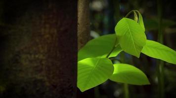 Blätter und Baum im Garten