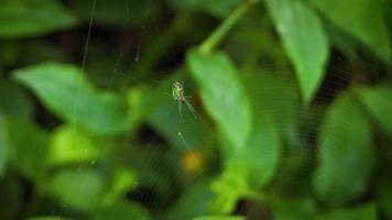 aranha verde no jardim