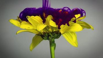 fiore giallo e inchiostro viola