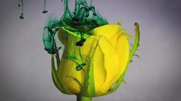 rosa gialla e inchiostro verde
