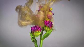 fiorellini rosa e inchiostro dorato