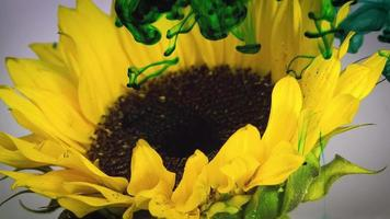 girasole e inchiostro verde