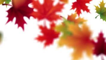 otoño cayendo hojas con fondo blanco marcador de posición video de animación