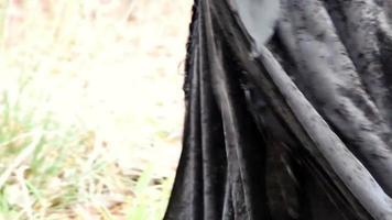 mulher viking andando na gras fecha vestido no outono video