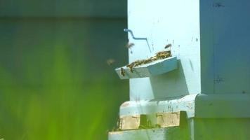 abejas en una colmena