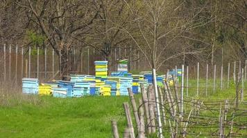 colmenas con abejas