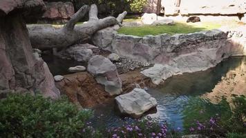 oso en el hábitat del zoológico con little creek