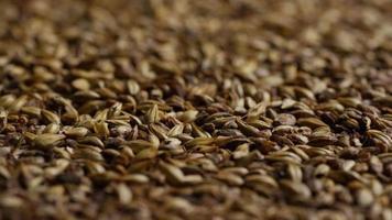 Tiro giratorio de cebada y otros ingredientes para la elaboración de cerveza: elaboración de cerveza 107