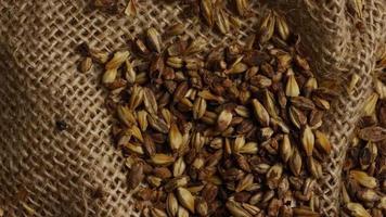 Tiro giratorio de cebada y otros ingredientes para la elaboración de cerveza: elaboración de cerveza 224