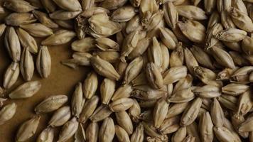 dose rotativa de cevada e outros ingredientes de fabricação de cerveja - fabricação de cerveja 115