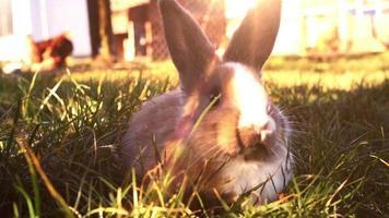 conejito de pascua blanco sentado en la hierba video