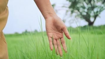 feche a mão de uma mulher tocando a grama verde em um campo soprado pelo vento