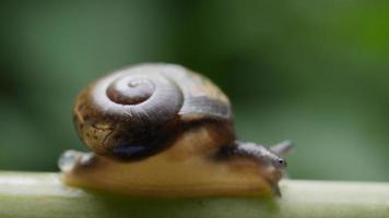 vista de perto de um pequeno caracol movendo-se lentamente em um galho video
