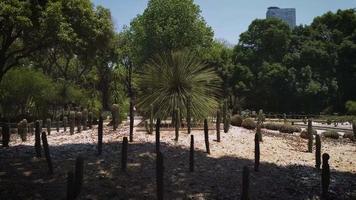 palmeiras e cactos no jardim botânico