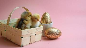 2 easter chicks in easter nest with pink background