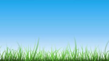 folhas de grama no lindo fundo do céu video