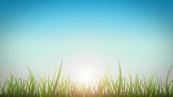 Grasblätter auf schöner Himmelhintergrundschleife