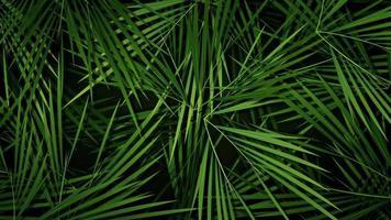 palmeiras de verão folhas loop de fundo video