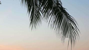 coqueiro ao pôr do sol