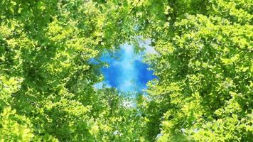 voo de quadro de folhas verdes