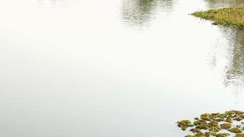 Flusswasseroberfläche und Vegetation