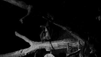 Visión nocturna de murciélagos alimentándose por la noche 4k.