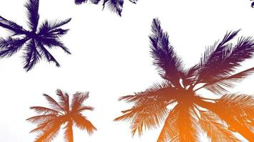 Kokospalmen mit Farbverlauf