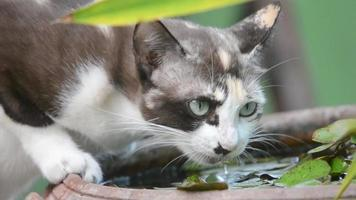 gato agua potable